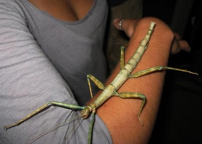 10 Gigantische Insecten Die Uit Een Nachtmerrie Lijken Te