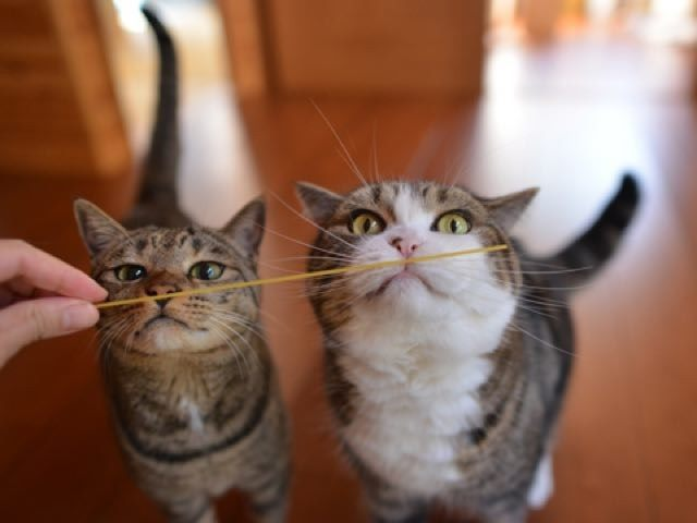 maru-and-hana