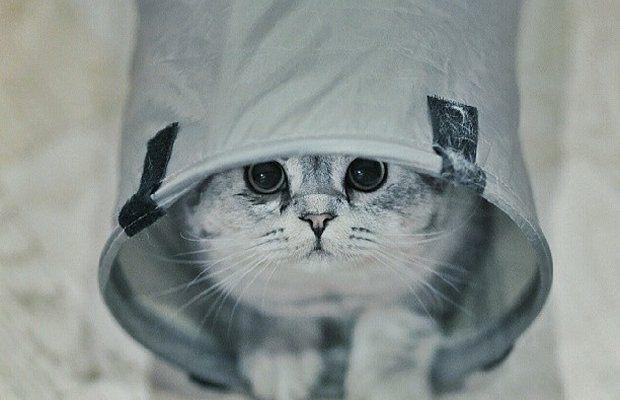 roku-cat