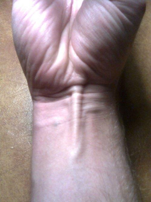 lange handpalmspier
